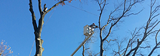 Tree Service | Total Tree Service and Landscaping LLC - West Hartford, CT